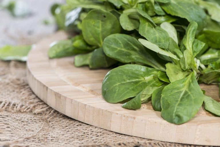 Grüner Salat Vogersalat Pflücksalat auf Holzbrett