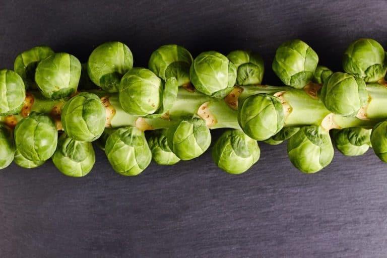 natur kohlsprossen rosenkohl gesund vitamine grün grauer hintergrund