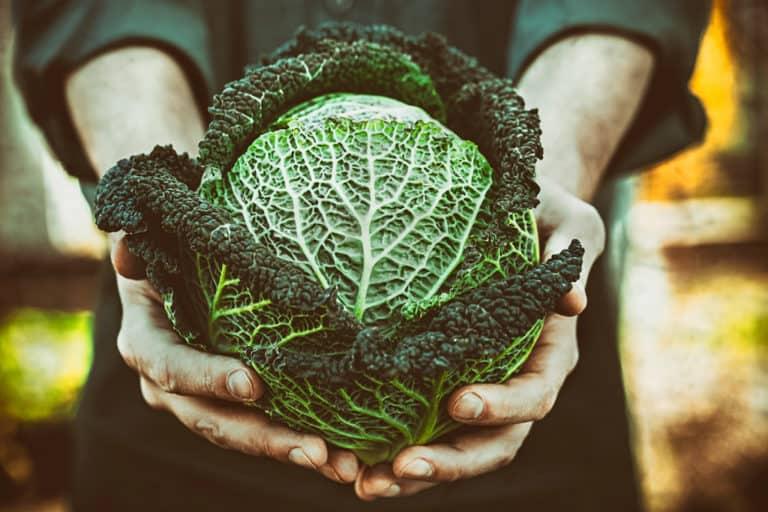 Gemüse gesund grün alkalisch Nährwerte Mikronährstoffe frisch grünkohl