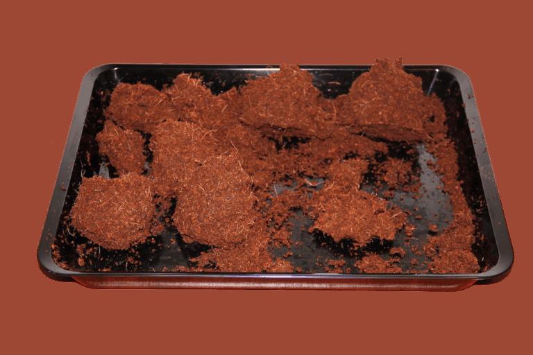 erdkugel kokoserde ausgewrungen mit wasser katawan