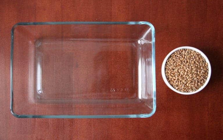 weizengras weizenkoerner in schale neben glasgefaeß auf tisch katawan