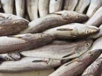 phosphor lebensmittel fisch gesund katawan klein
