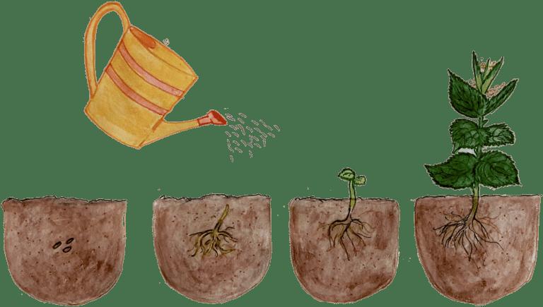 Brennnesselsamen anbauen anpflanzen