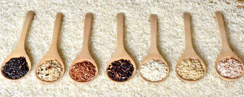 Reis verschiedene farben orange weiss schwarz katawan