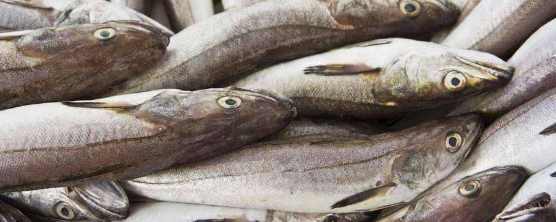 phosphor lebensmittel fisch gesund katawan