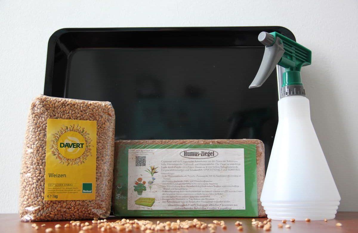 Weizengras anbauen mit Kokoserde - eine umfassende Anleitung.
